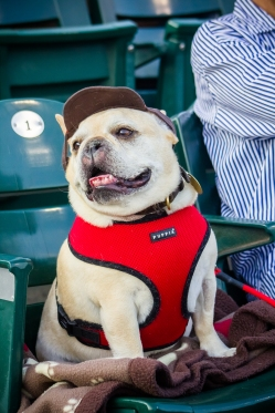 Bark_2015_IMG_8466_Photo_Credit_Pawsh_Dog[1]